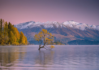 Mountains, Snow, Wanaka Tree, Autumn, Lake Wanaka
