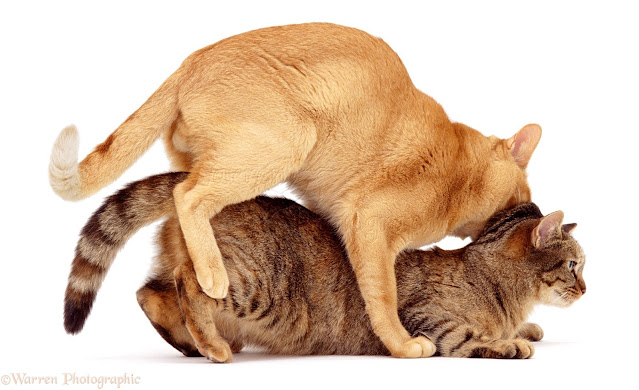 Guide to Cat Mating and Reproduction