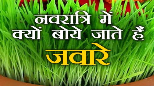 NAVATRI 2021 नवरात्रि में क्यों बोये जाते हैं जौ, मां भगवती को क्यों प्रिय है जानिए 10 वजह