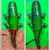 Un robot camaleón se camufla con el fondo en tiempo real