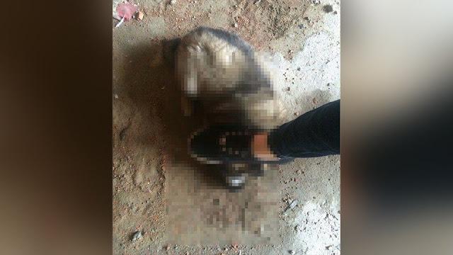 Две девушки из Хабаровска забирают из приюта животных, а затем убивают их, фотографируя издевательства