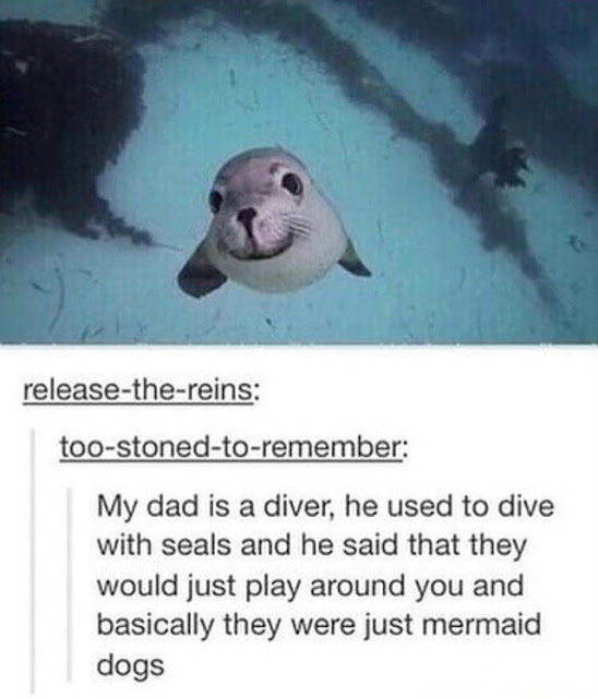 Wholesome Seals