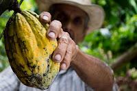 faire baisser la tension artérielle : le cacao