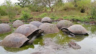 turtle-day-satire, कछुए, कछुओं पर व्यंग्य, देश के सिस्टम पर व्यंग्य, satire on system