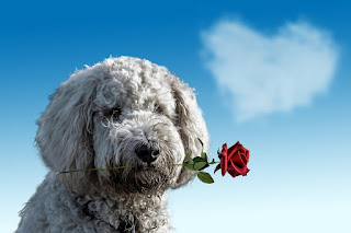 Valentine's day - first day Rose day image propose for dog