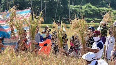 Dibantu PT. Bukit Asam Dengan Pompa Irigasi Tenaga Surya, Sawah Tadah Hujan di Sawahlunto Segera Dialiri Air