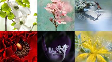Naturaleza en macro. Fotos premiadas en IGPOTY N.10 Macro Art