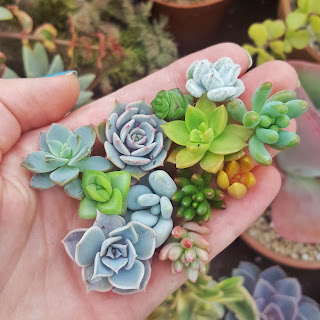 How to make a succulent arrangement