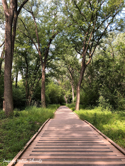 A boardwalk helps hikers enjoy marshy areas of Pheasant Branch Conservancy
