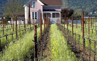 napa_valley_vineyard