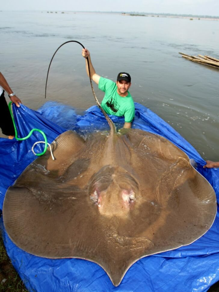 20 Astounding Animals Who Are Larger Than We Thought