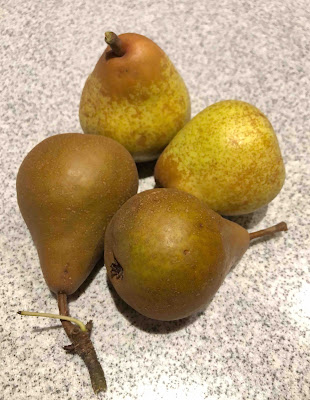 the harvest from the small pear tree in the pasture
