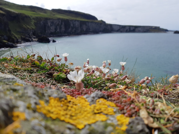 Northern Ireland Ocean Cliff with a closeup of colourful wildflowers. Photo taken by Elisabet Ingiberggson