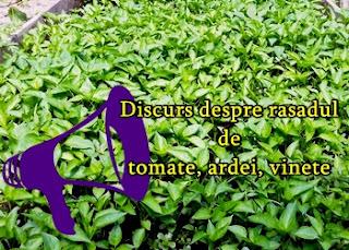 Discurs despre rasadul de tomate, ardei si patlagele vinete