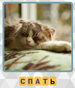 кошка спит положив морду на лапы 3 уровень игры 600 слов