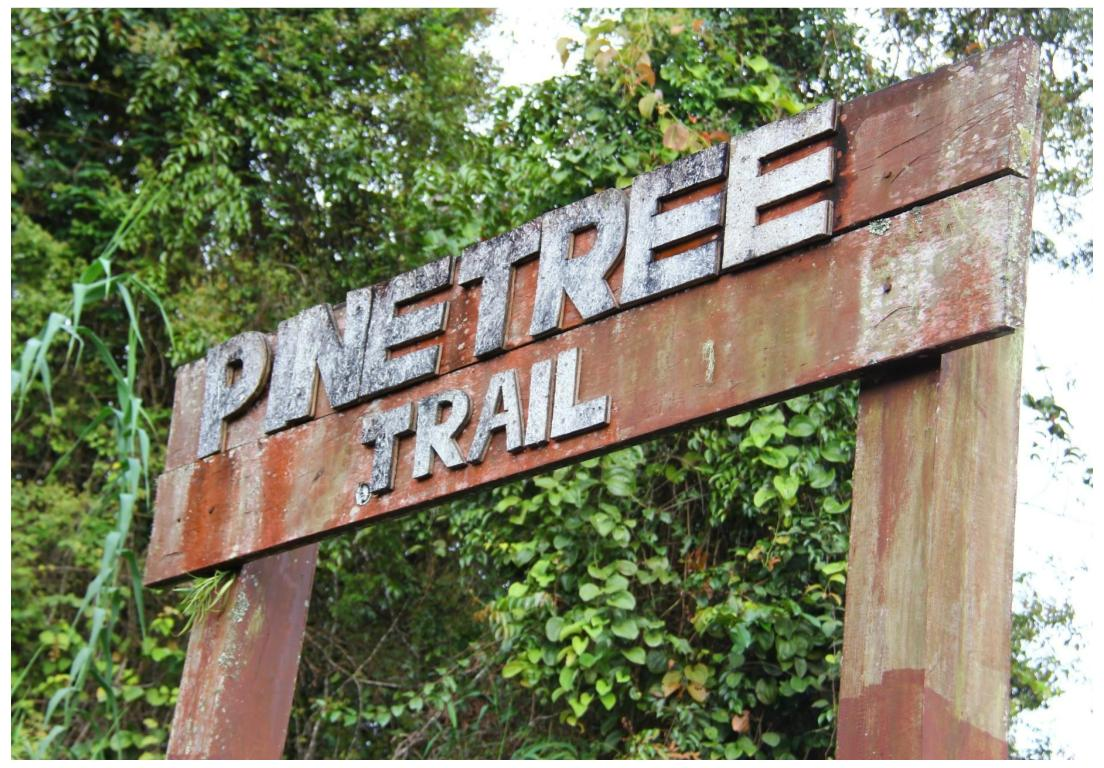 Pintu gerbang Pine Tree Trail