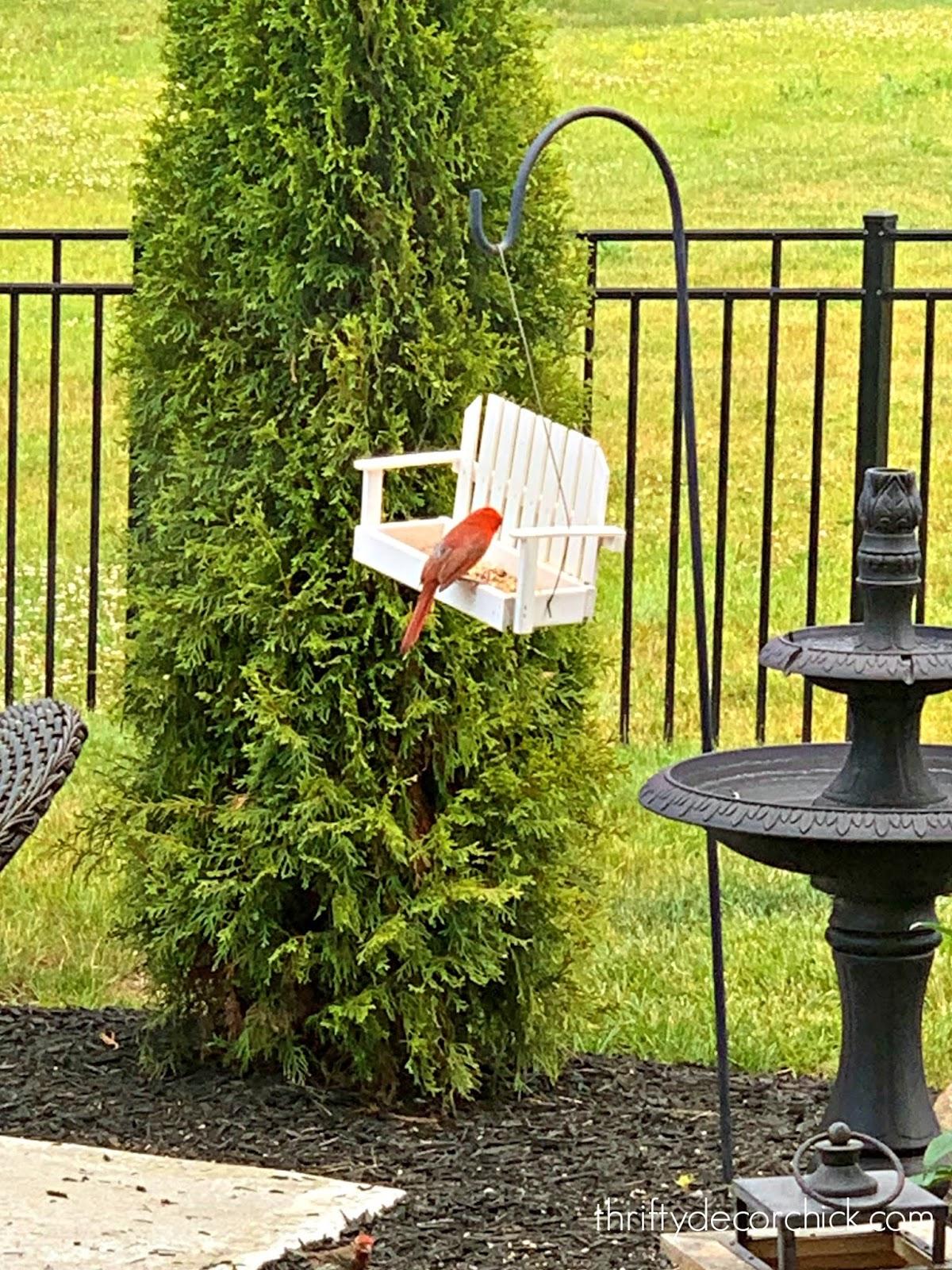 My favorite bird feeders