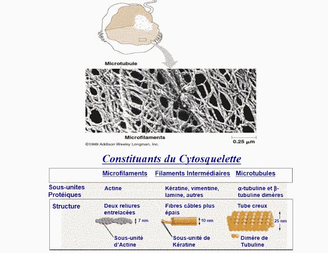 Structure globulaire