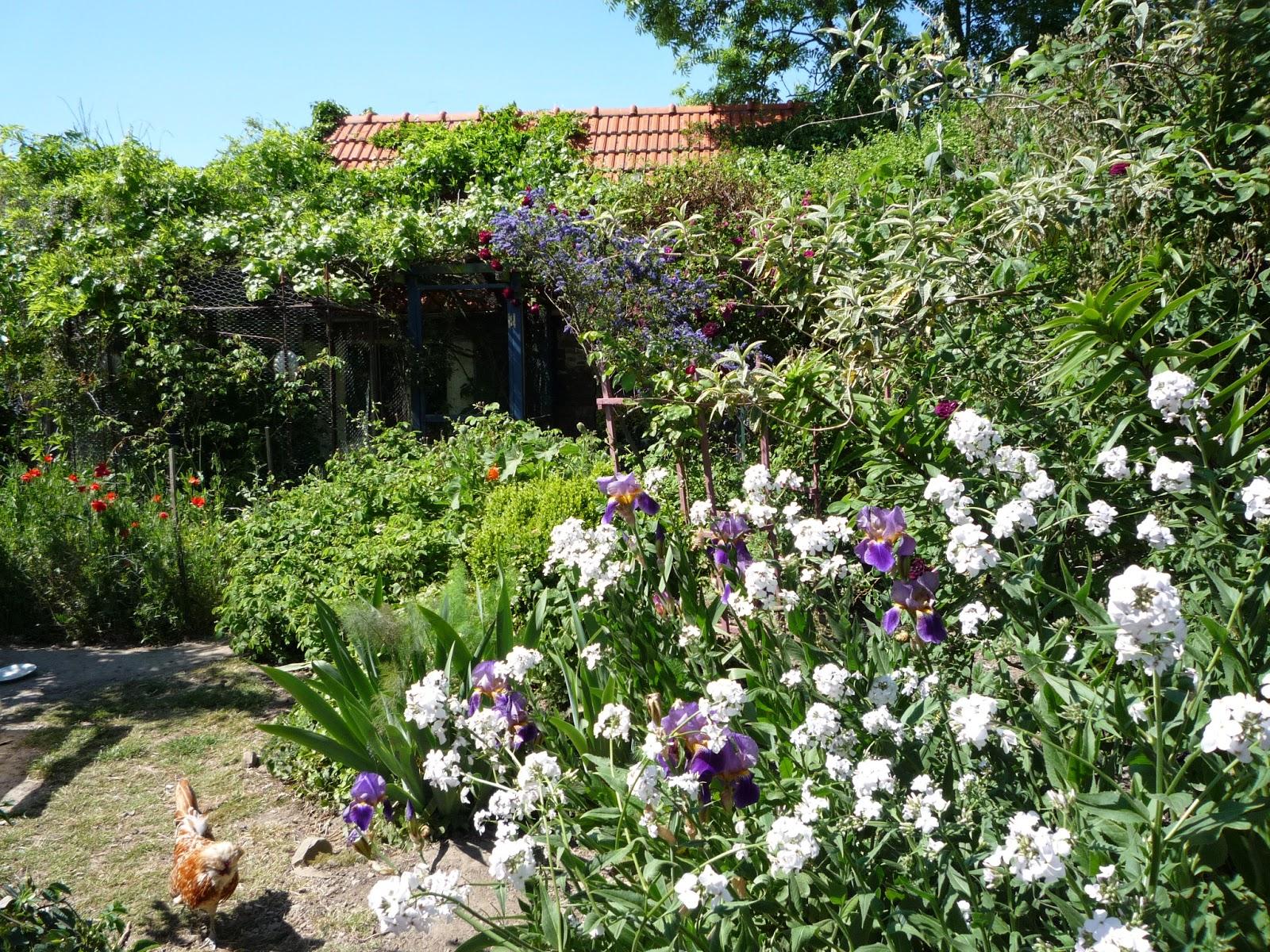 Organic flower border