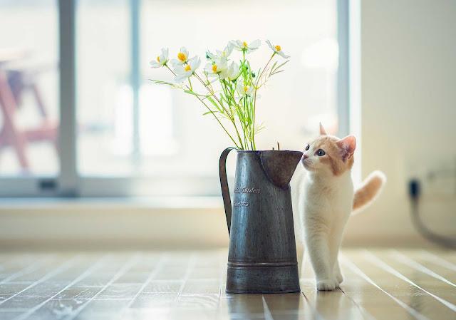 اجمل صور القطط في العالم 2020