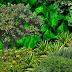 ATENŢIE! 10 cele mai otrăvitoare plante din România considerate de unele gospodine flori, din cauza aspectului lor frumos și a parfumului încântător pe care îl emană
