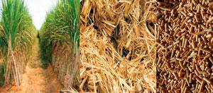 Energi alternatif yaitu Biomassa