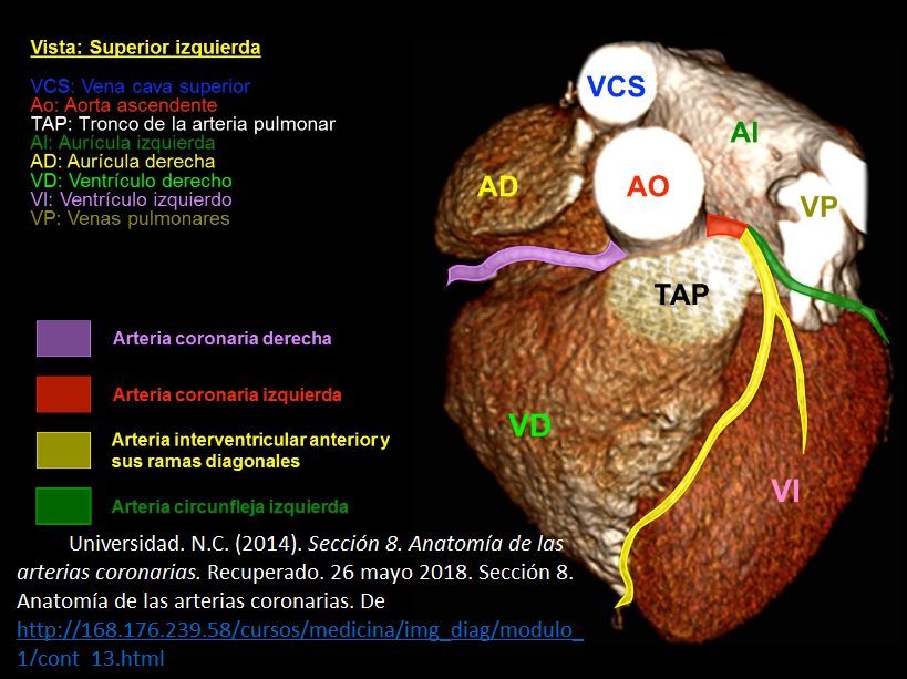 Blog de anatomía radiológica humana- UNAD- Grupo 154003_40-2018 ...