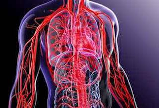 kan damarları
