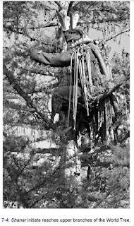Schamane und Weltenbaum, Baum des Lebens