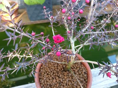 12月23日 開花