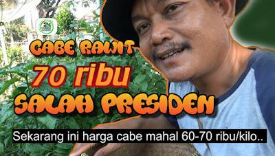Harga Cabe Rawit Mahal Salah Presiden