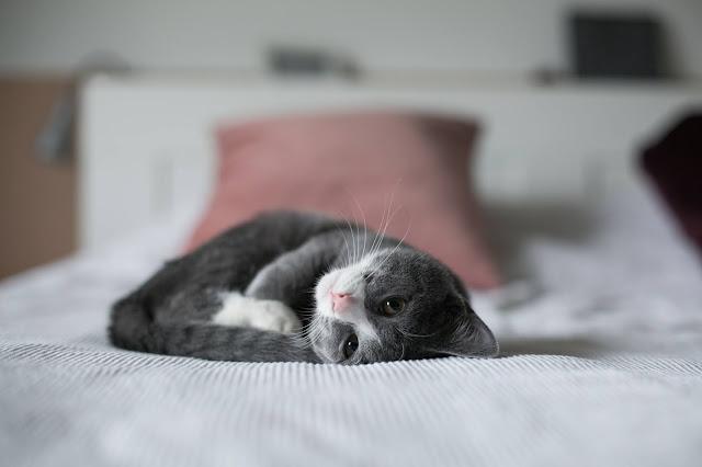 "kitten.<span>Photo by <a href=""https://unsplash.com/@enka80?utm_source=unsplash&amp;utm_medium=referral&amp;utm_content=creditCopyText"">Nine Köpfer</a> on <a href=""https://unsplash.com/s/photos/kitten?utm_source=unsplash&amp;utm_medium=referral&amp;utm_content=creditCopyText"">Unsplash</a></span>"