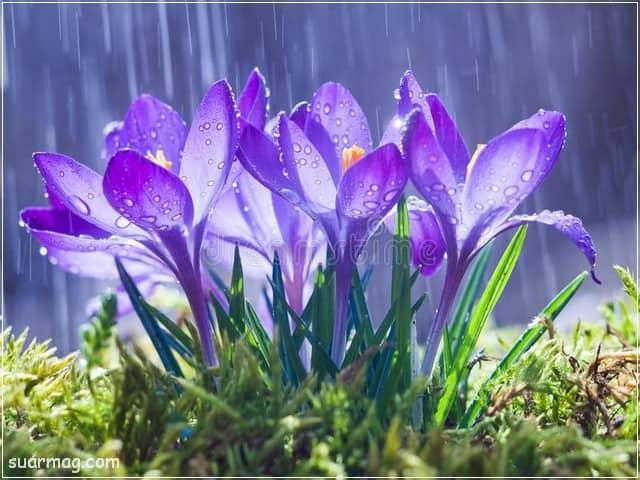 صور ورد 3 | Flowers Photos 3