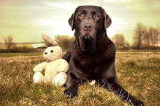 lab and bunny bear
