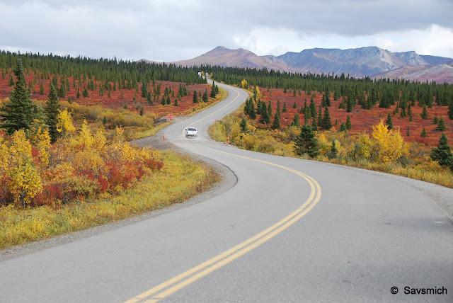 Denali scenic road