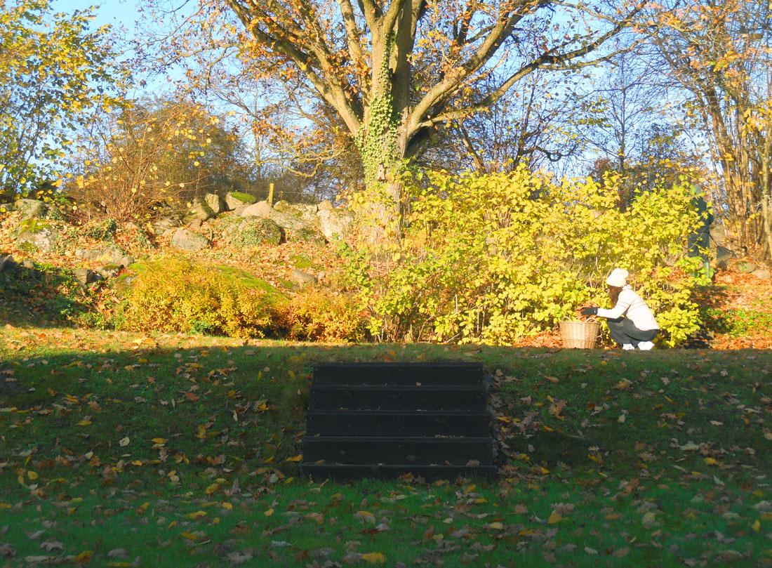 12 novembre in giardino a raccogliere le foglie