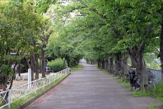 新幹線公園から来た道を振り返る