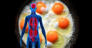 Penemuan Ilmuwan,Manfaat Makan Telur 3 Butir Perhari