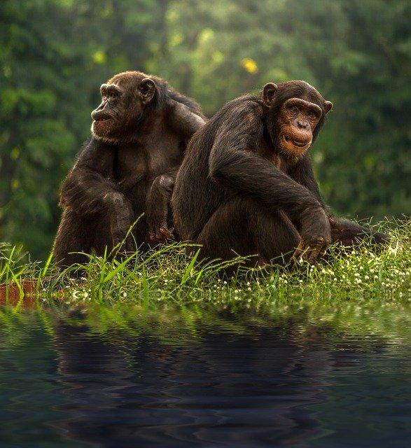 50 من أكثر الأنواع المهددة بالانقراض في العالم