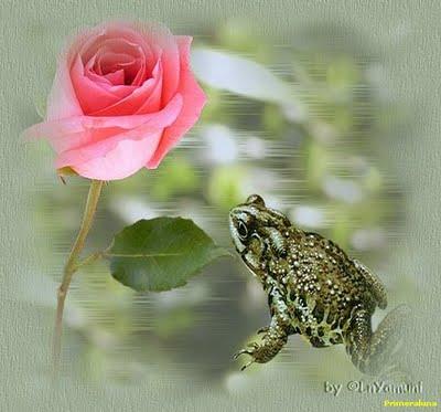 Resultado de imagem para conto o sapo e a flor