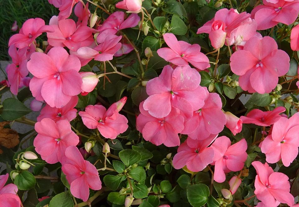 Entre plantas y macetas consejos para cuidar la alegr a - Plantas exteriores todo el ano ...