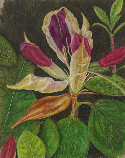 Garden drawing -- rhodie