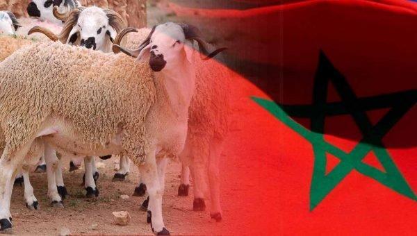 عاجل..وزارة الأوقاف والشؤون الإسلامية تعلن رسميا يوم الجمعة 31 يوليوز أول أيام عيد الأضحى