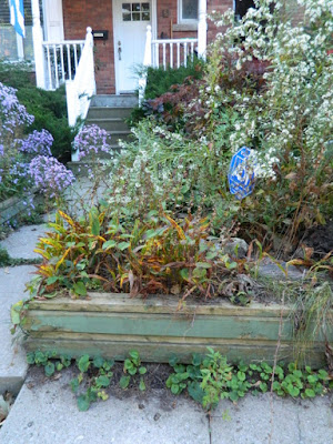Toronto Roncesvalles Front Yard Fall Cleanup Before by Paul Jung Gardening Services--a Toronto Gardening Company