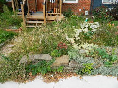 Toronto Front Garden Fall Cleanup Before in East York by Paul Jung Gardening Services--a Toronto Organic Gardener