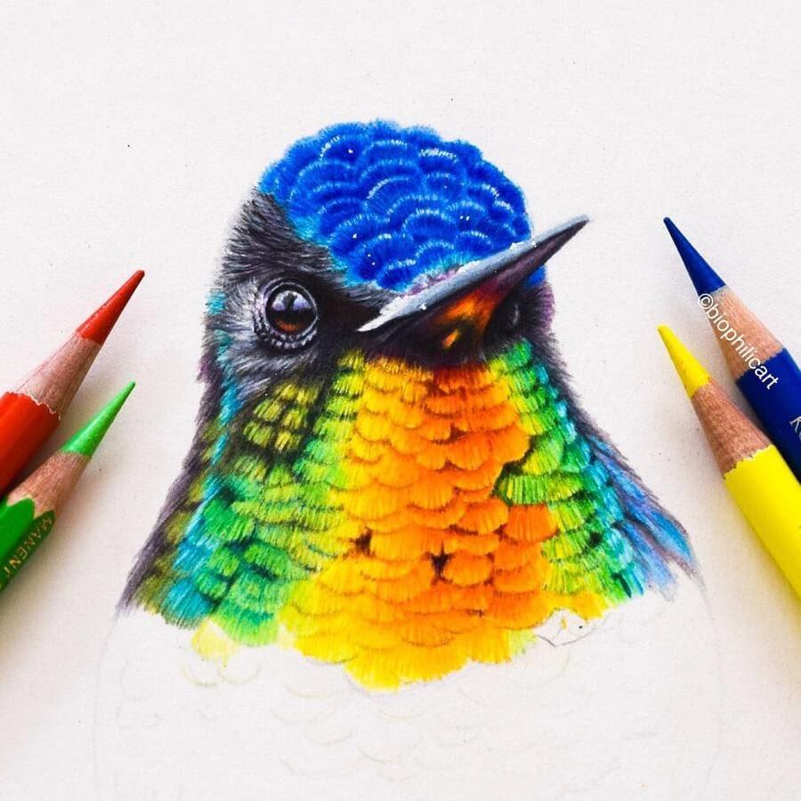 03-Hummingbird-portrait-Sallyann-www-designstack-co