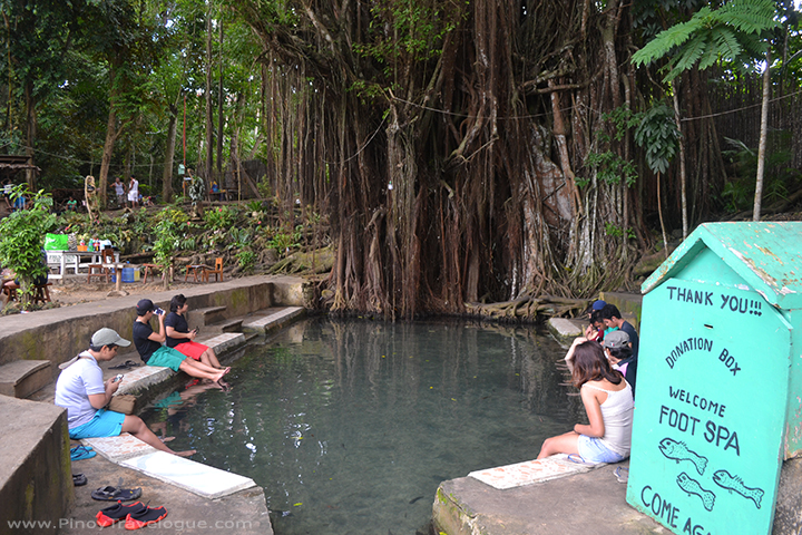 "Siquijor's old, ""enchanted"" balete tree and the fish spa basin below"