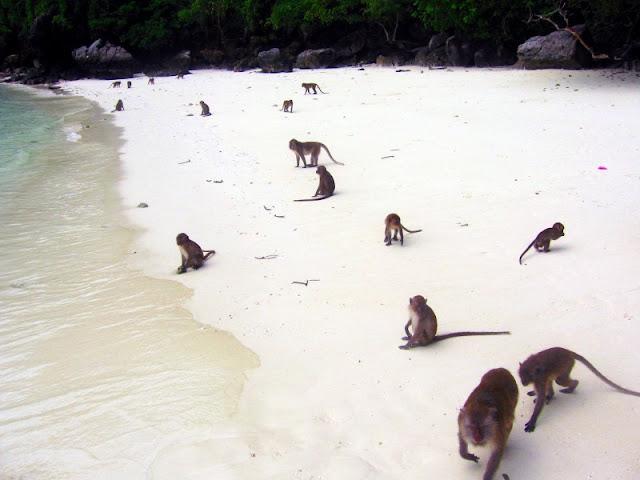 Monkey Beach Phi Phi Island, Pulau Terindah di Phuket