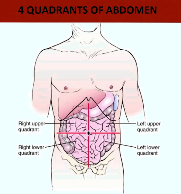 quadrants-of-abdomen