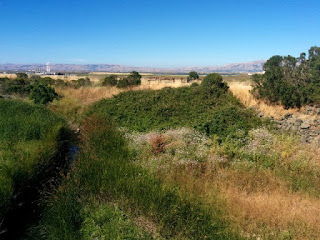Riparian corridor of Stevens Creek, hills of the Diablo Range in the distance, Stevens Creek Trail, Mountain View, California